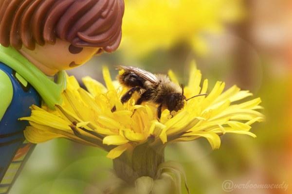Br+¿ve 8   abeille
