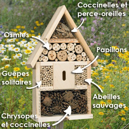 Br+¿ve 8   h+¦tel insectes